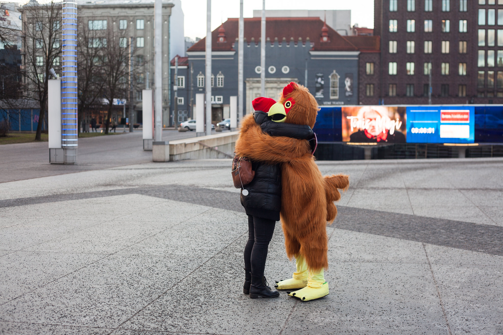 Tallinnas liikusid ringi kallistavad kanad