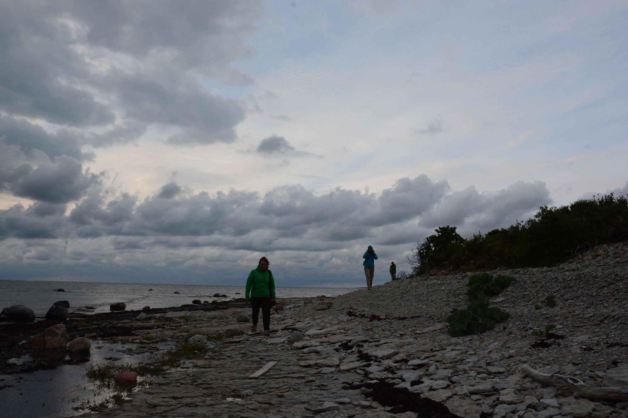 Kivide vahel tasub otsida põnevaid fossiile. Foto: Kadri Paomees