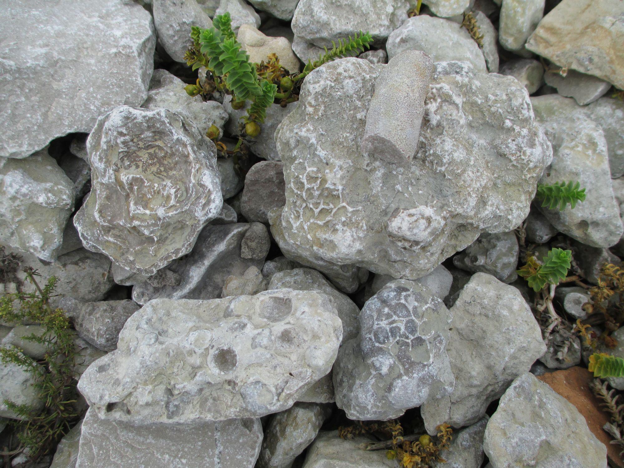Fossiilipalade assortii Katri pangal.