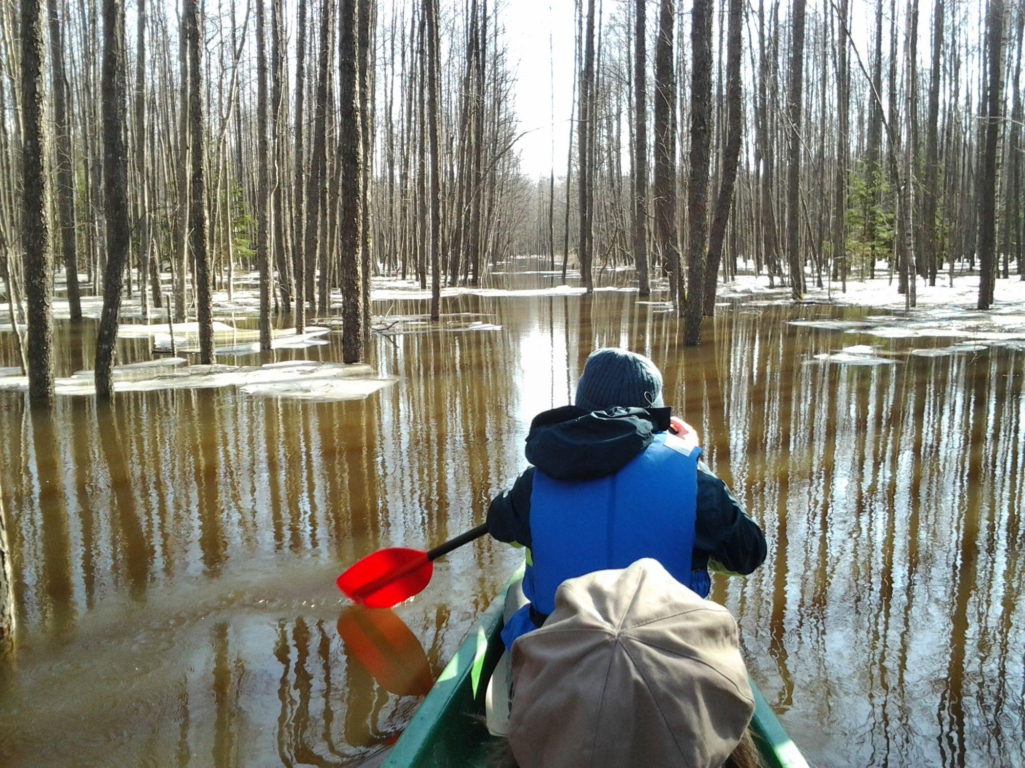 Kanuumatk Soomaa rahvuspargi üleujutusalal. Aivar Ruukel