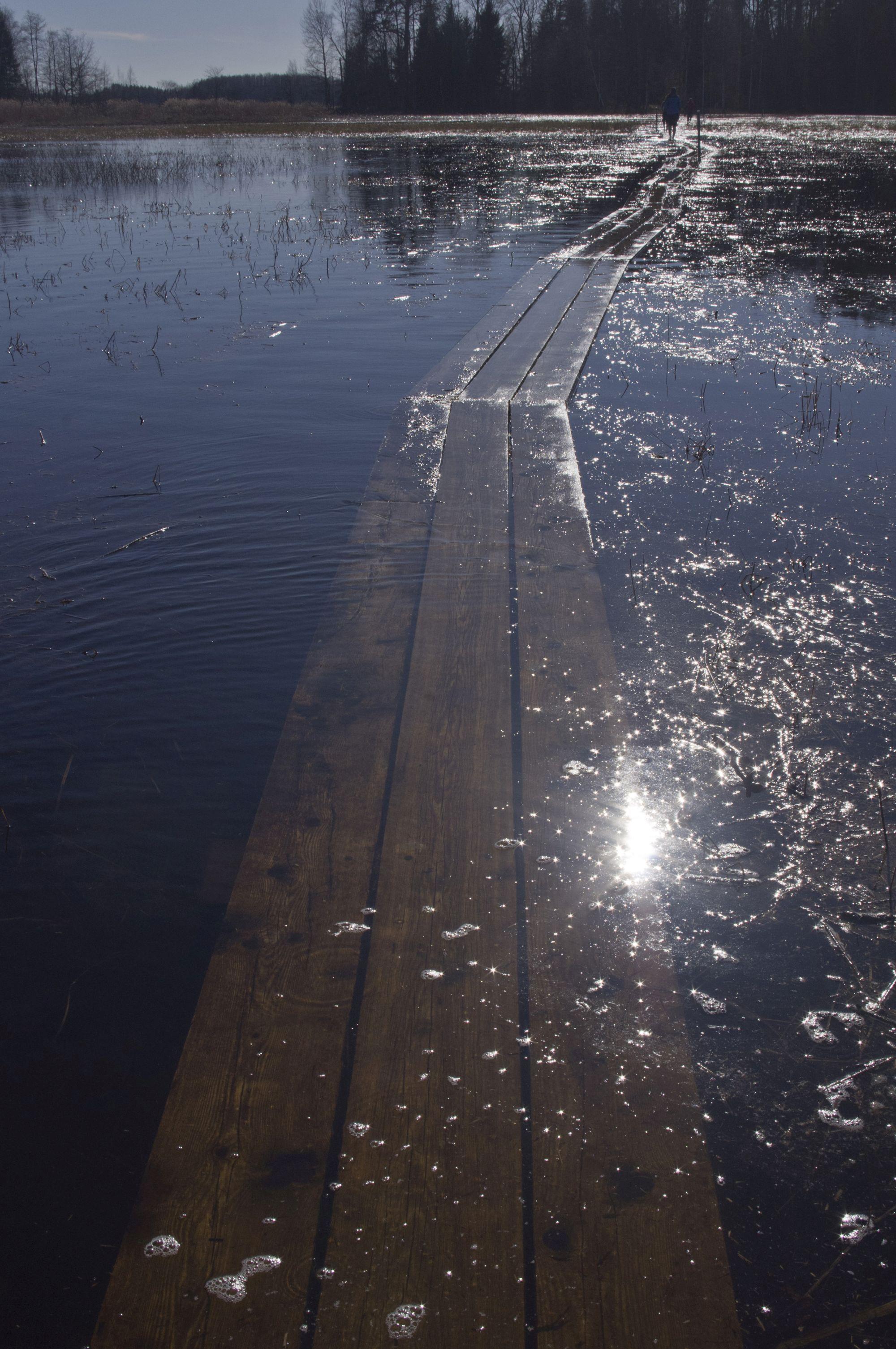 Sukeldunud laudteel sai kohati solberdada vaid pahkluudeni ulatuvas vees, samas kui teisal ulatus järvevesi põlvedeni. Foto: Kadri Prants.