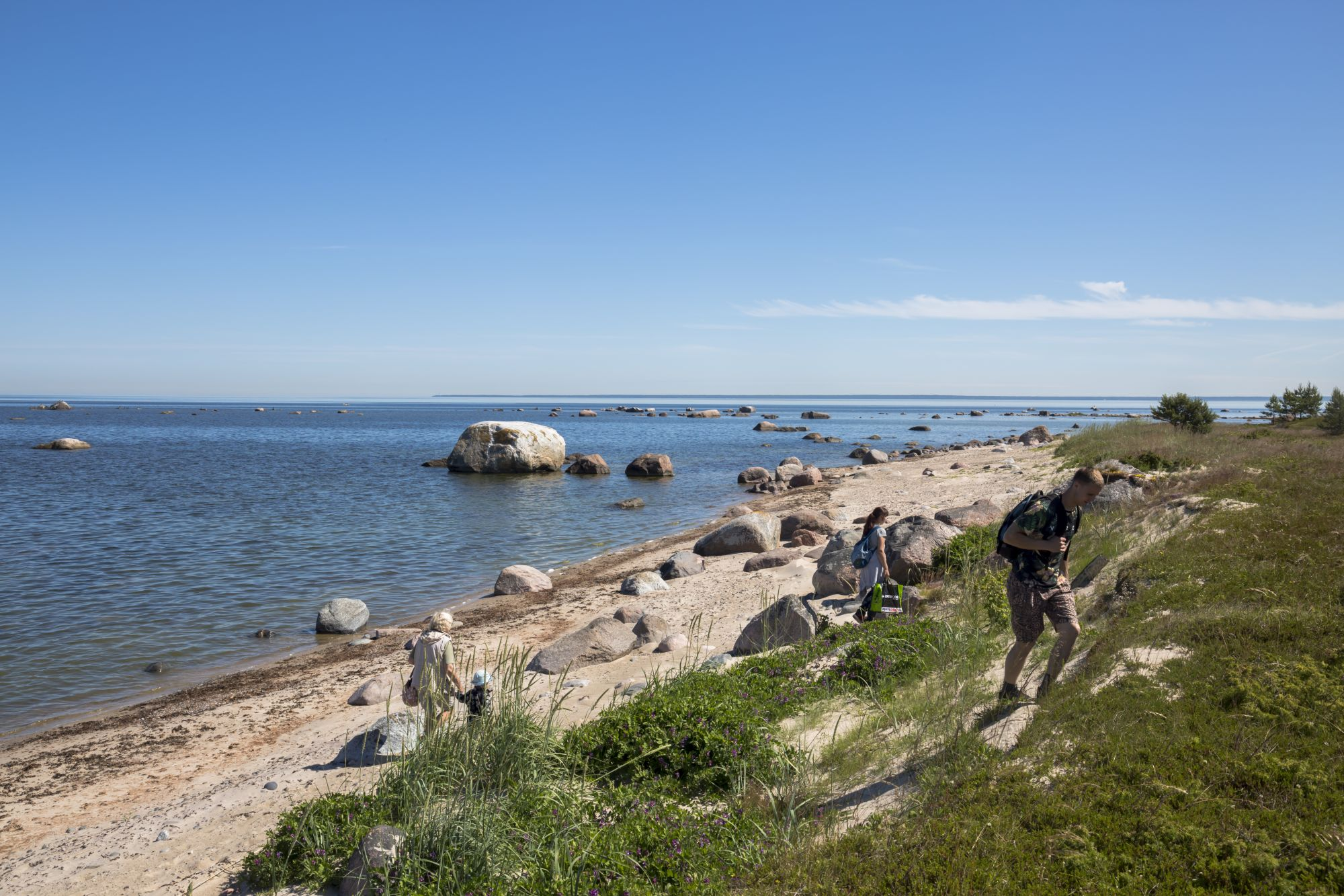 Koipsi suvilate juures asub liivane kaldajärsak.