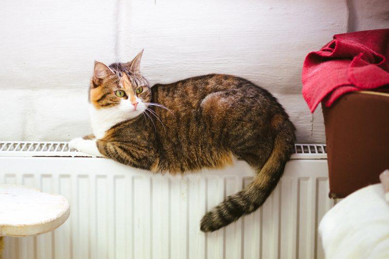 MTÜ Kasside Turvakodu aitab annetuste abil hüljatud kasse uutesse kodudesse