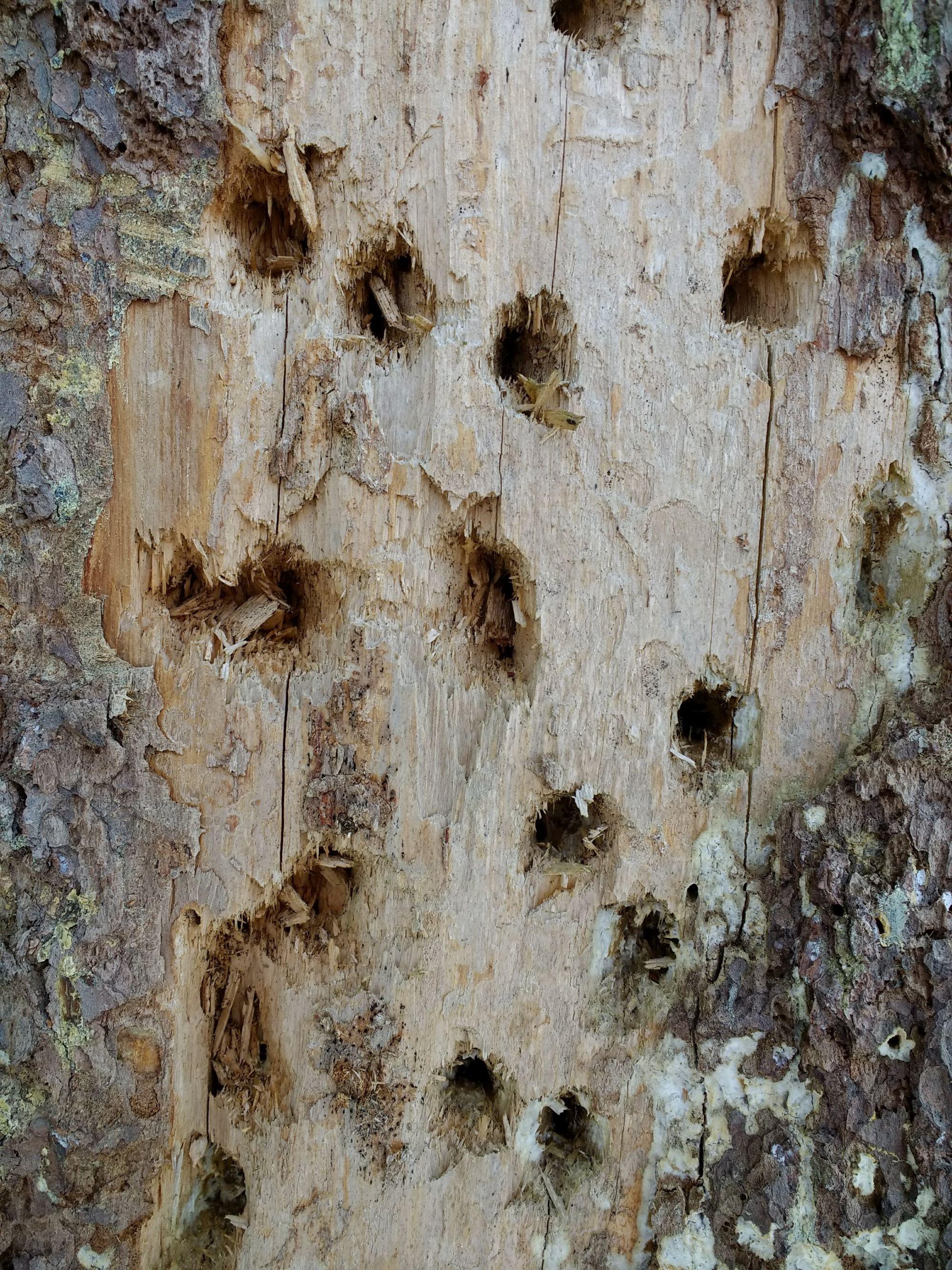 Rähnid pole surnud puule armu andnud.