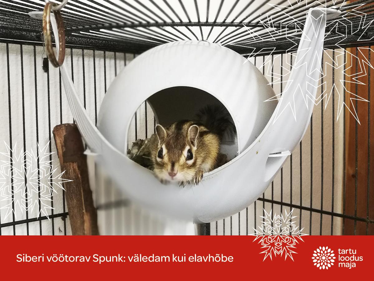 Spunki esimesed jõulud Tartu loodusmajas