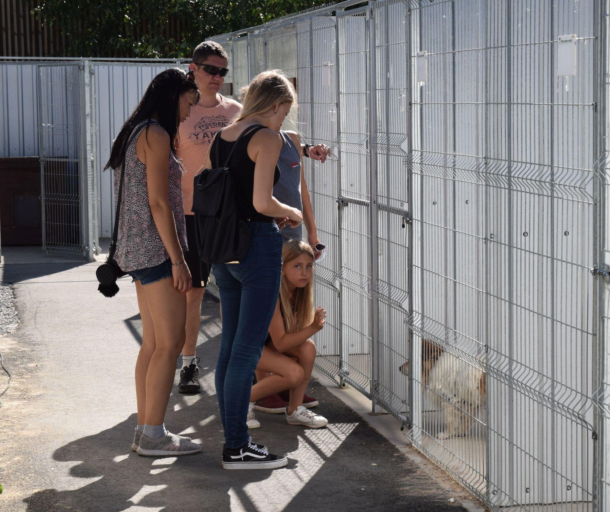 Kuidas läheb loomade varjupaikadel karantiini tingimustes?