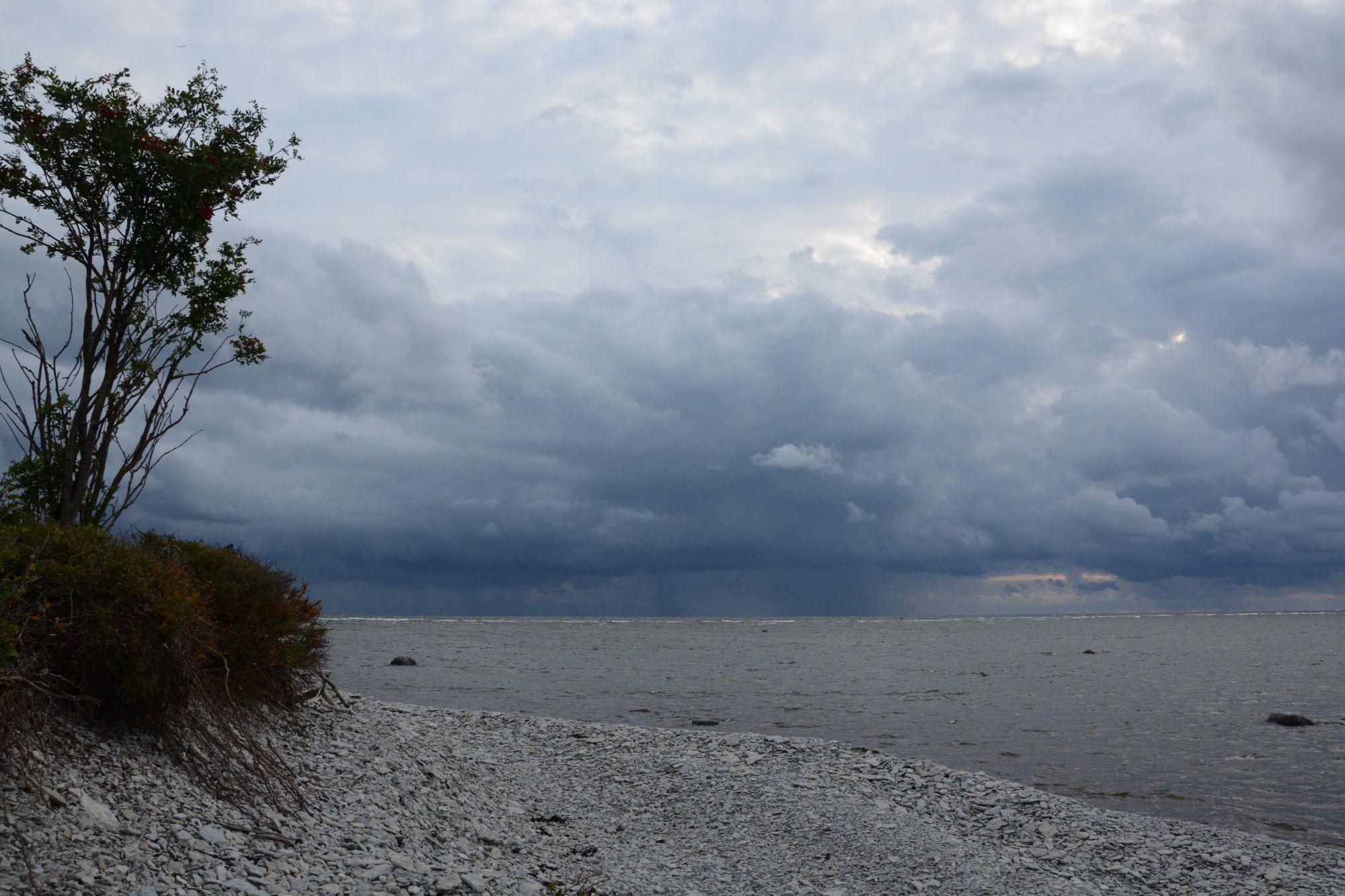 Kivise ja halli joonena piirab klibu saare esikmetsa rohelust. Foto: Kadri Paomees.