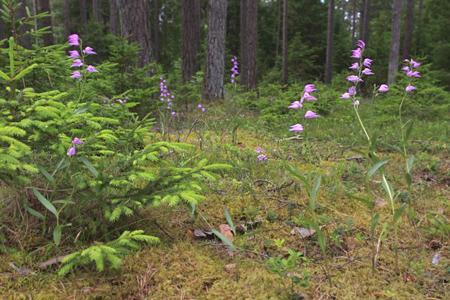 2010. aasta orhidee on punane tolmpea