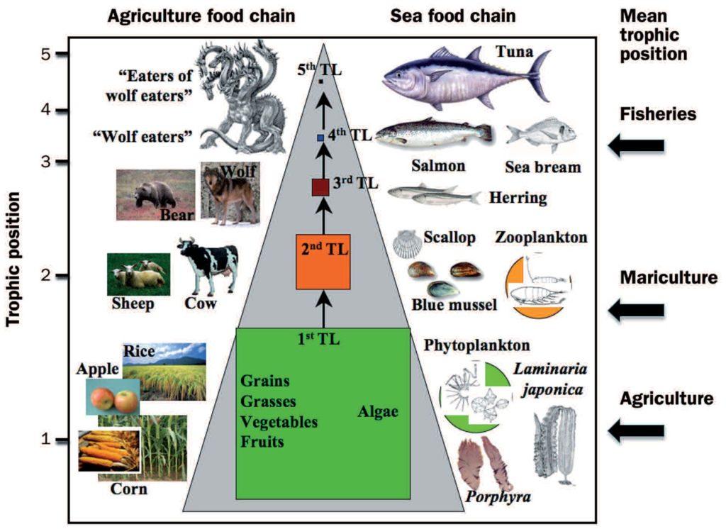 Joonis 1. Energiakadu toiduahelas väljendub biomassi vähenemises toiduahela igas lülis (keskel). Näiteid maismaa- (vasakul) ja veeorganismide (paremal) kohast toiduahelas(17).