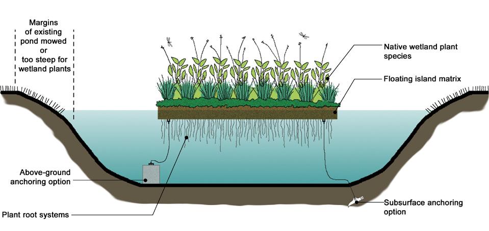 Eestis ainulaadsed tehislikud ujuvsaared rajatakse Rakvere Soolikaoja tiikidesse