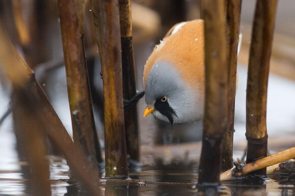 Eesti Looduse fotovõistluse võitis roohabekas